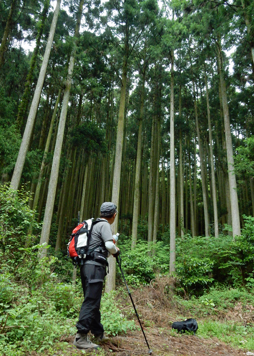2016,5,8郡岳-19