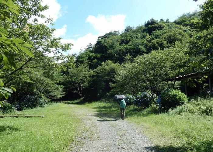 2016,7,3障子岳-10