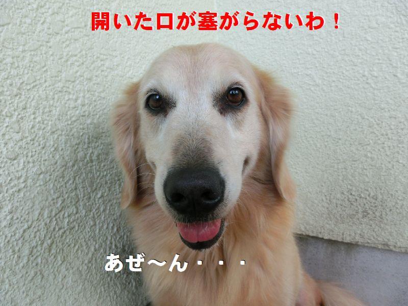 h_20161016003235e39.jpg