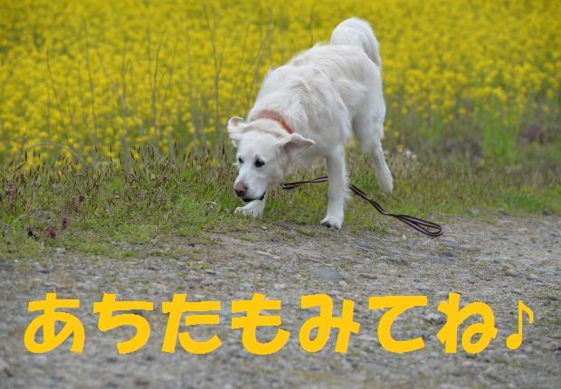 DSC_3626_convert_20160425152308.jpg