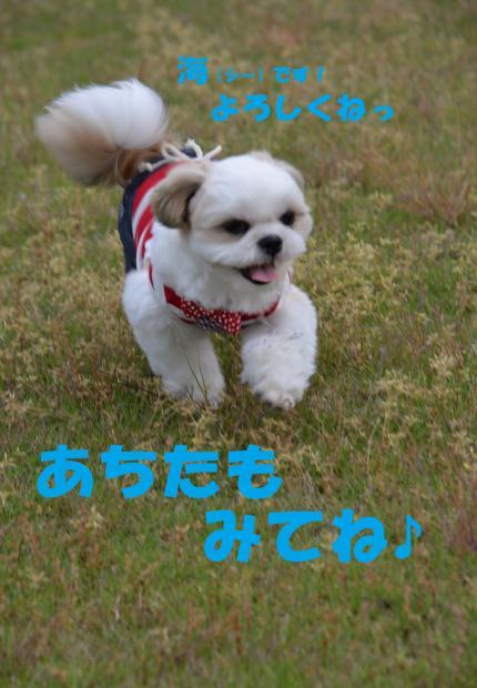 DSC_4208_convert_20160528015628.jpg