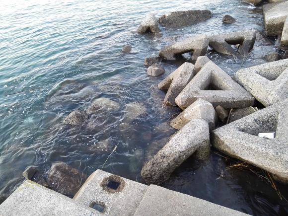 鴨川釣行 鴨川漁港 海の写真