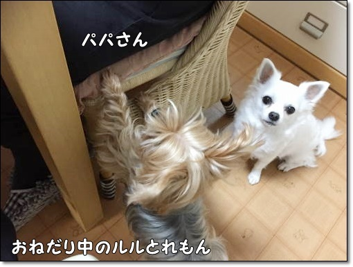 IMG_7637.jpg