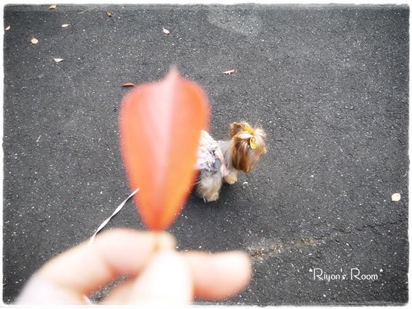 紅葉とカメラ③