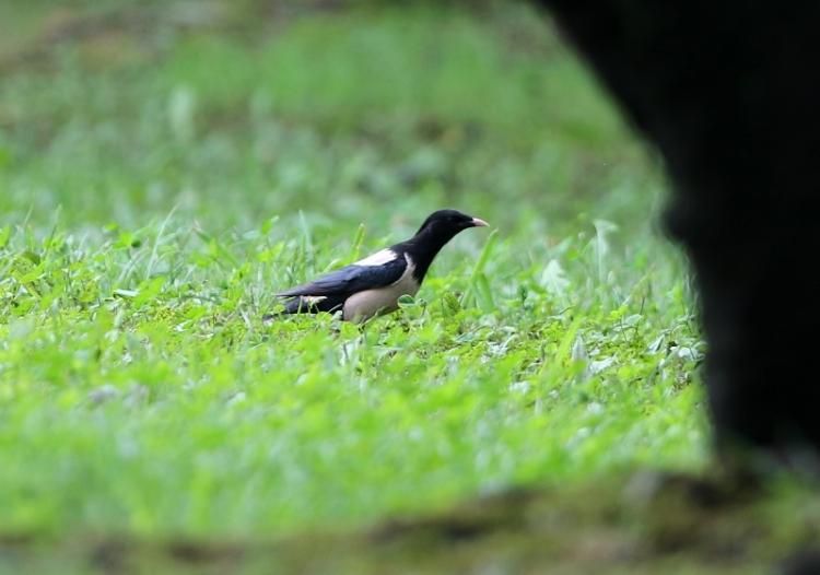 鳥名不明2160930