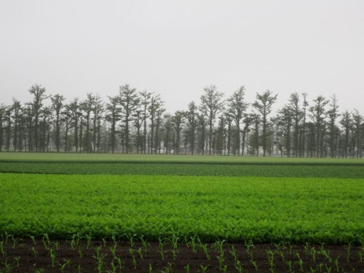 田園風景2160704
