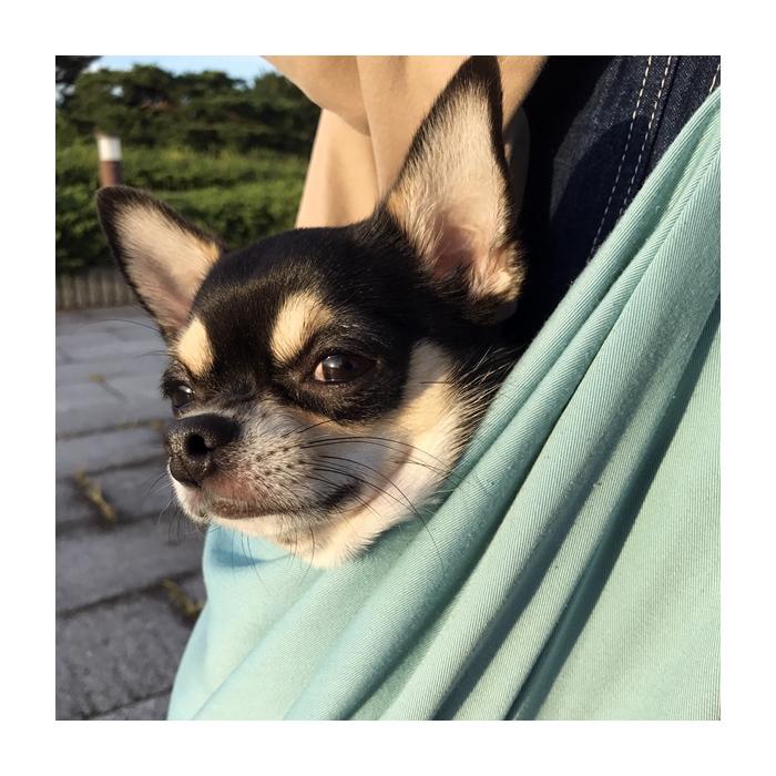 2016-10-20 ちまき 8 ブログ用