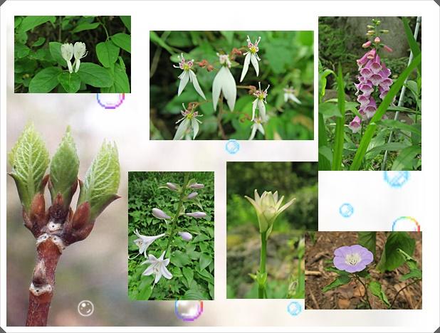 御岳渓谷の花々