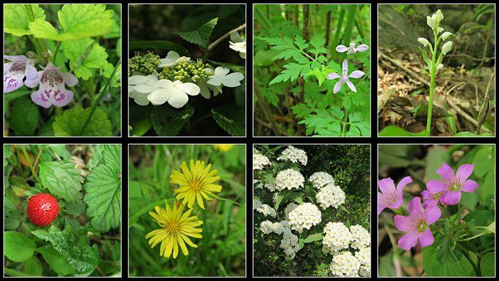 御岳渓谷花々