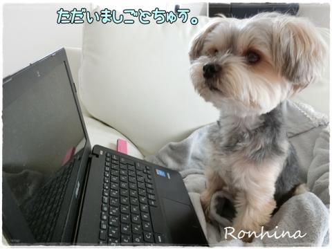 ロンくんお仕事?①