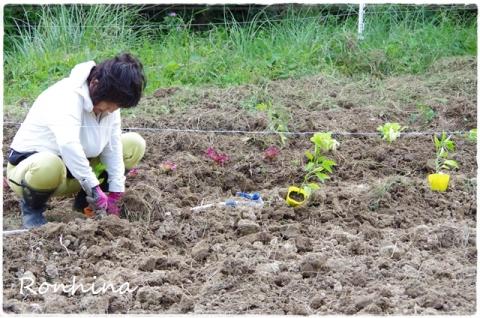 野菜を植える⑤