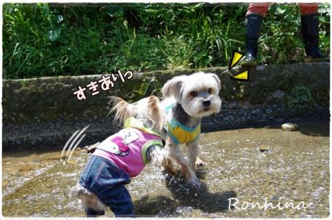 川遊び(農場)⑤