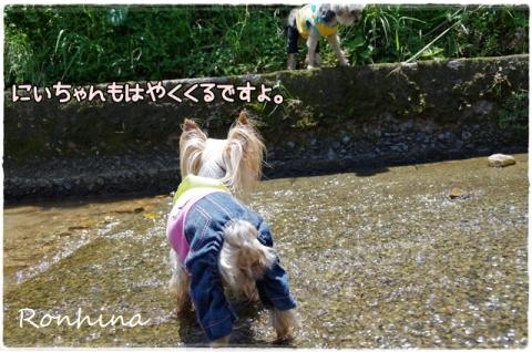 川遊び(農場)④