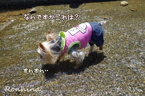 川遊び(農場)③