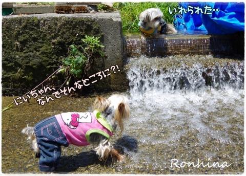 川遊び(農場)⑨