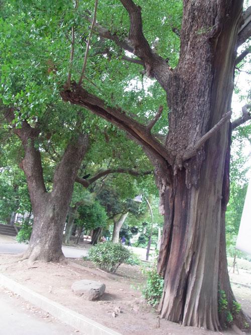 上野 戦災の木1