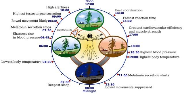 2000px-Biological_clock_human.jpg