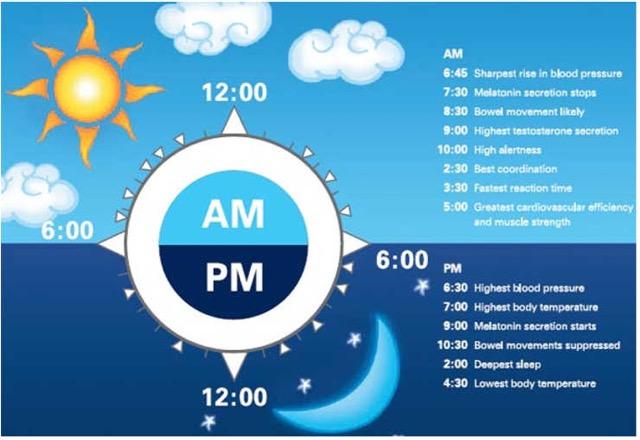 circadian-rhythm.jpg