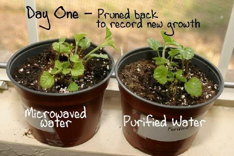 plant2_small.jpg