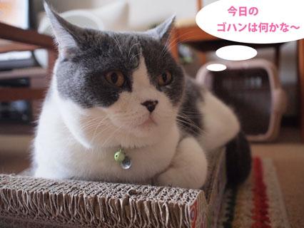 シーバ食べたい