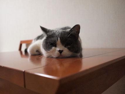 もう、眠いんだってば