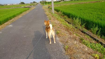翔 2016.7.24-6