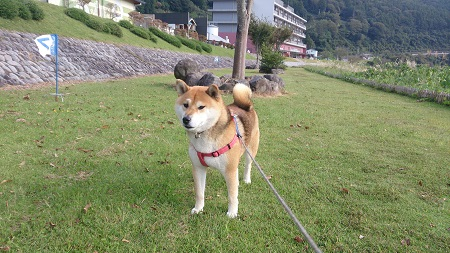 翔 2016.10.16-6