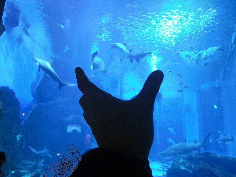 水族館のチラシっぽい画像を作る 龍虎ブログ えすかるGO