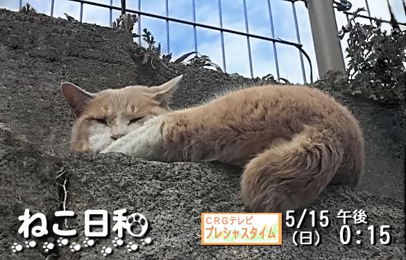 ネコ を ねこ歩きのポスターっぽくする メイキング 完成!   龍虎ブログ えすかるGO
