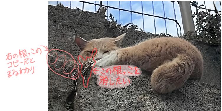 ネコ を ねこ歩きのポスターっぽくする メイキング? ひげや根っこを消す  龍虎ブログ えすかるGO