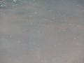 P-4337.jpg