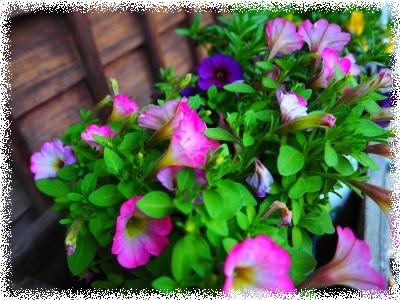 2玄関の花