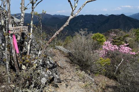 シラケ山山頂