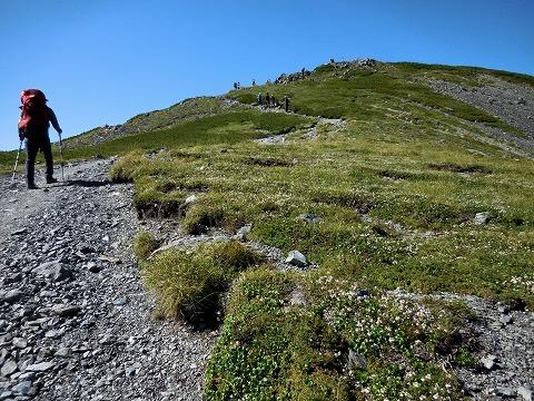 コゴメグサ咲く斜面