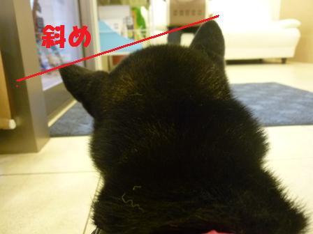 blog11207.jpg