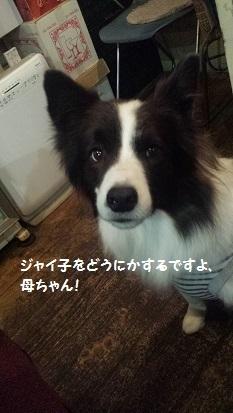20161029_183304 - コピー