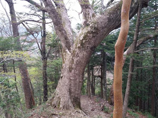 amagase110-092.jpg