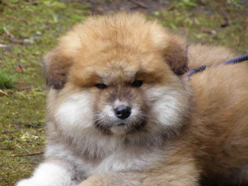 チャロ子犬2