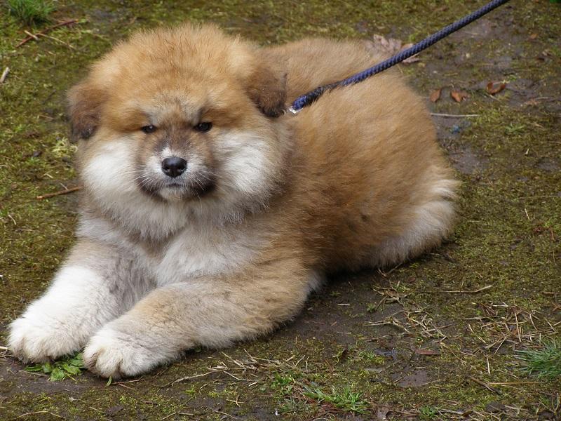 チャロ子犬3