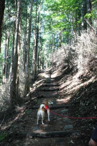 笠取山11