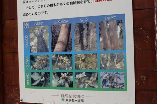 笠取山下山31