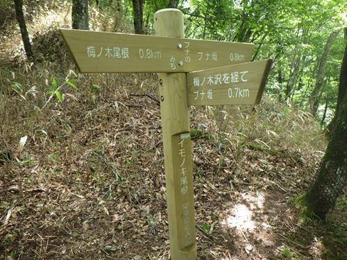鶏冠山下山21