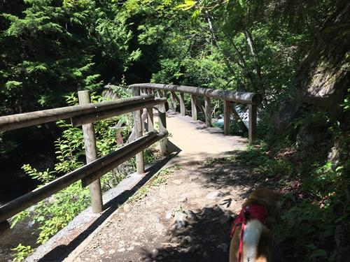 善五郎の滝11