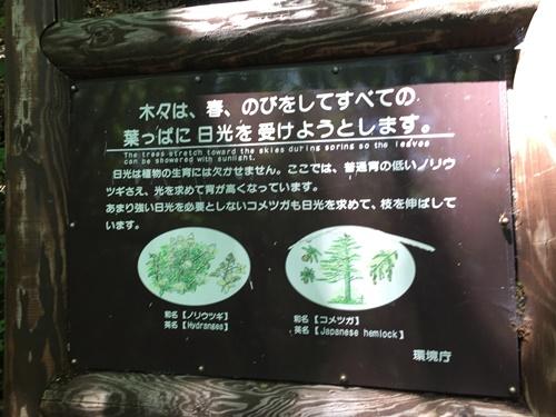 善五郎の滝29