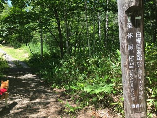 善五郎の滝34