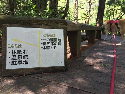 善五郎の滝52