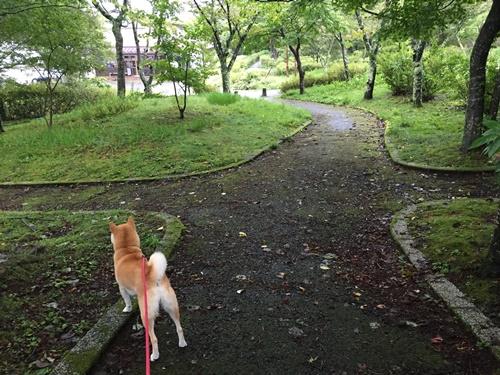 旭ヶ丘公園4