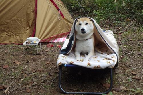 あさまの森キャンプ場35