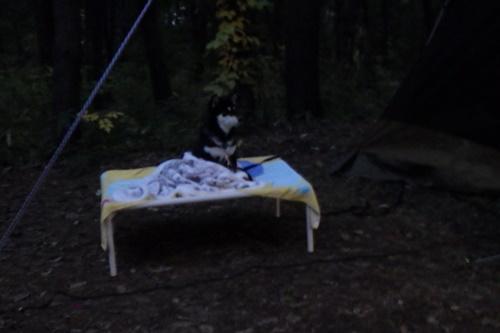 あさまの森キャンプ場47