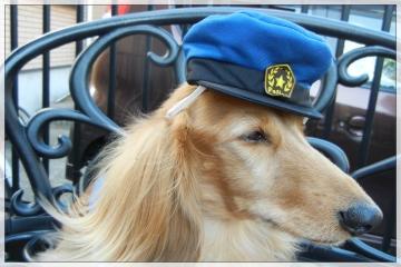 H28102503犬のおまわりさん